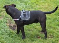 EZYDOG Convert Harness Modern Köpek Göğüs Tasması XL Siyah