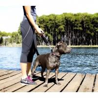 EZYDOG Neo Mongrel Köpek Tutamac Aparatı Kırmızı